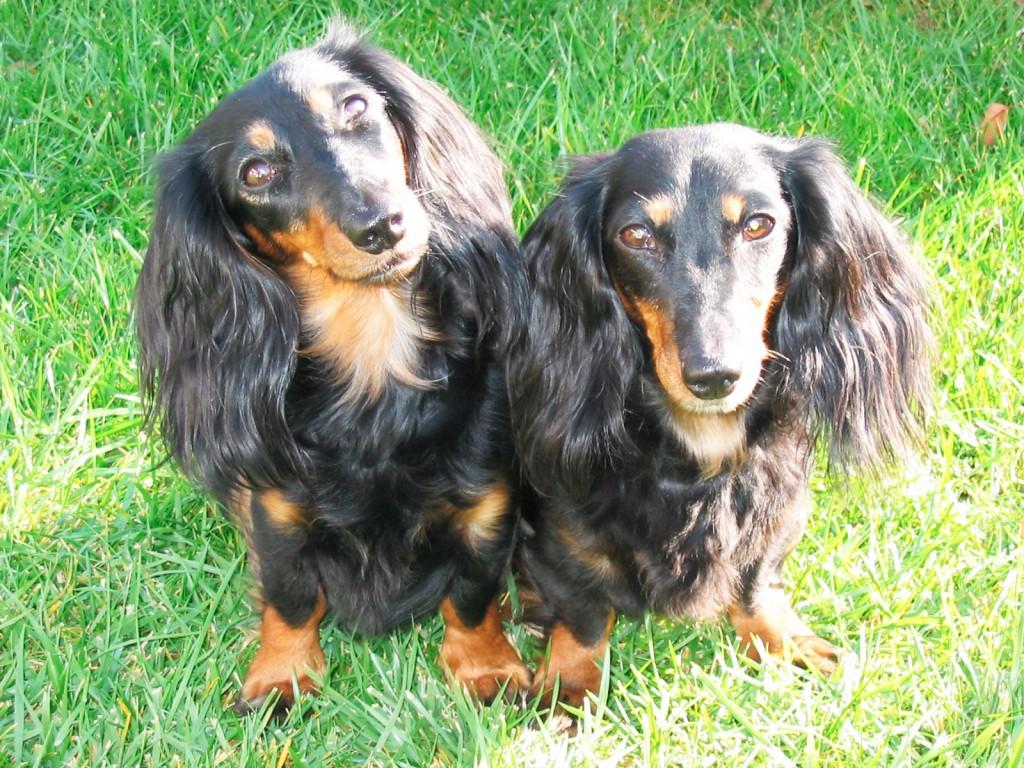 17.10.2007 Cimba und Jenny